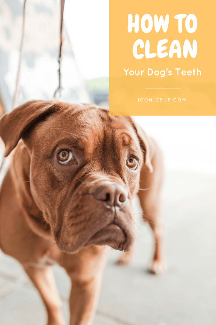 Tips for cleaning a dog's teeth