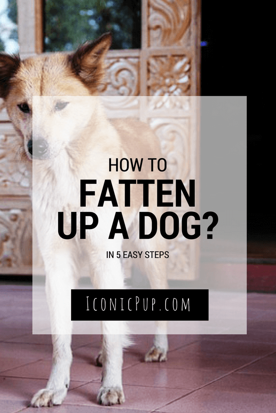 How To Safely Fatten up a Thin Dog