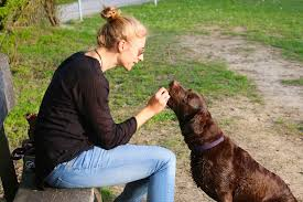 Training a Dog Starts with Feeding
