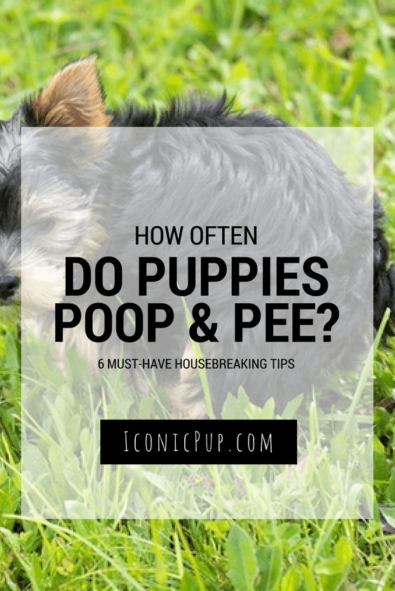 Puppy Poo and Pee - How Often?