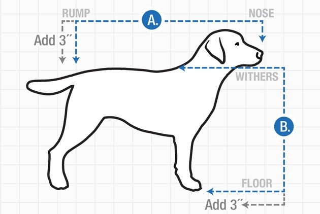 Dog Measurements, width and height allowing a space of 3-4 inches