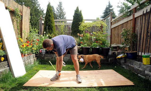 Man measuring out plywood with a dog behind in the garden.