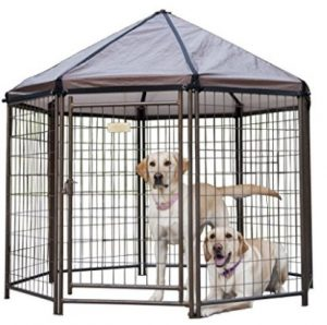 Best Large Dog Gazebo