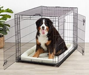 Best Cheap Dog Crate