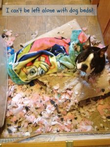 Shredded dog bed