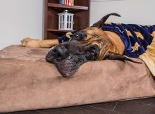 "Big Barker 7"" Pillow Top Orthopedic Dog Bed for Large and Extra Large Breed Dogs Reviews"