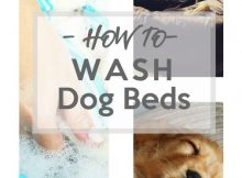 Keeping Dog Beds Clean